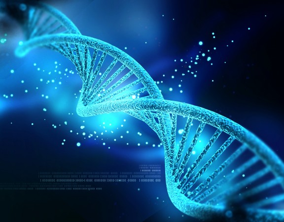 """O """"DNA"""" de um recreador"""